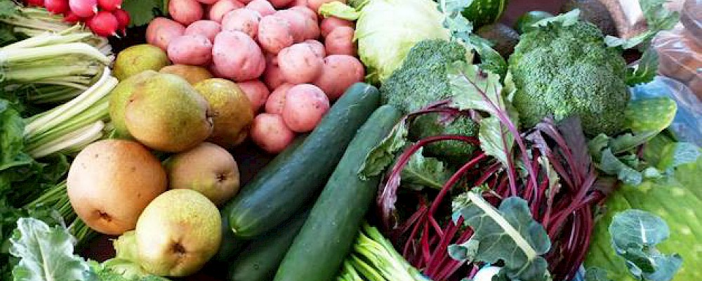 ORGANIC PRODUCE TO YOUR DOOR IN PLAYA DEL CARMEN