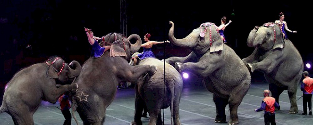 NO MORE ANIMAL CIRCUSES IN QUINTANA ROO