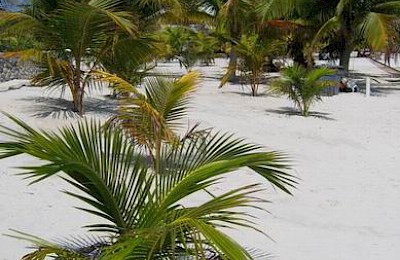 Tulum Real Estate Listing | Tulum Lot, Suite 47