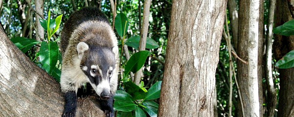 Wild Playa del Carmen Animals and Where to Find Them