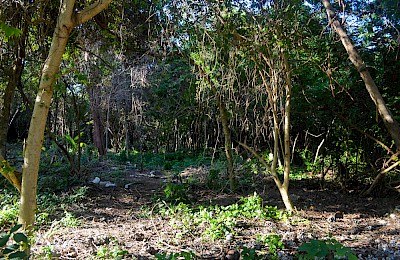 Tulum Real Estate Listing | Los Arboles Tulum Corner Lot D2