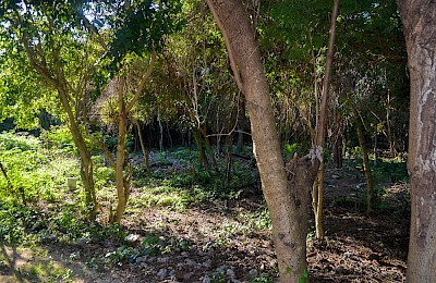 Tulum Real Estate Listing | Terreno Gran Cenote