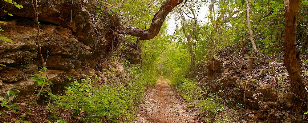 'Camino del Mayab' Multi-Use Trail Circuit Planned for Yucatan